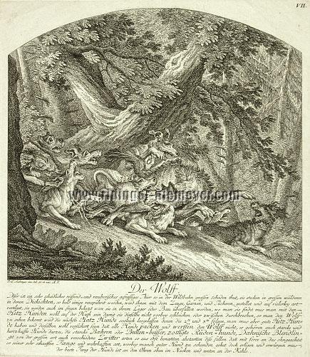 Johann Elias Ridinger, Wolf