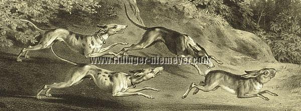 Ridinger, Hare Hunt (Menzler)