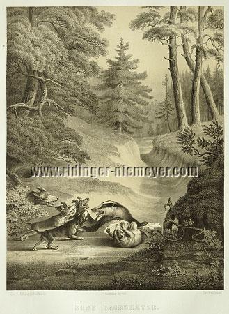 Johann Elias Ridinger, Badger Hunt (Lithograph by Hermann Menzler)