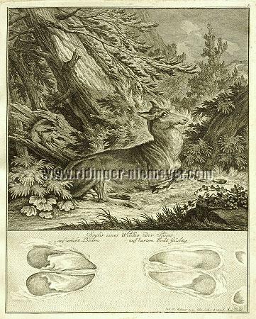 Johann Elias Ridinger, Trace of a Deer
