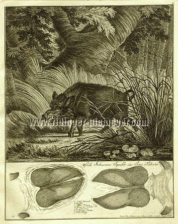 Johann Elias Ridinger, Wild Boar Trace