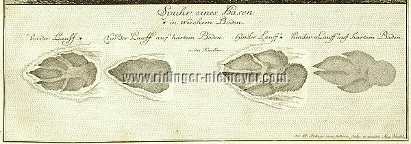 Johann Elias Ridinger, Spuhr eines Hasen