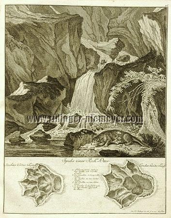 Johann Elias Ridinger, Trace of an Otter