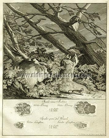 Johann Elias Ridinger, Trace of a Marten / Weasel