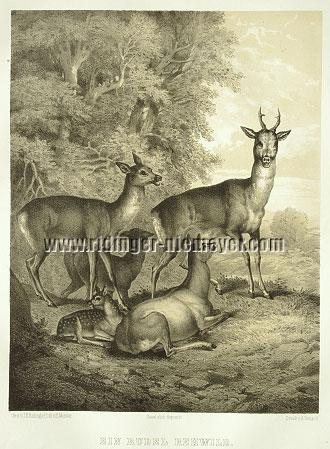 Johann Elias Ridinger, Herd of Roe Deer