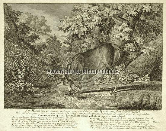 Johann Elias Ridinger, Ein Hirsch von 16 Enden