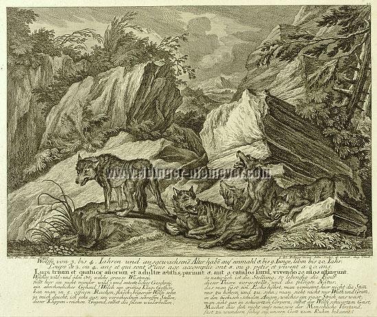 Johann Elias Ridinger, Wölfe