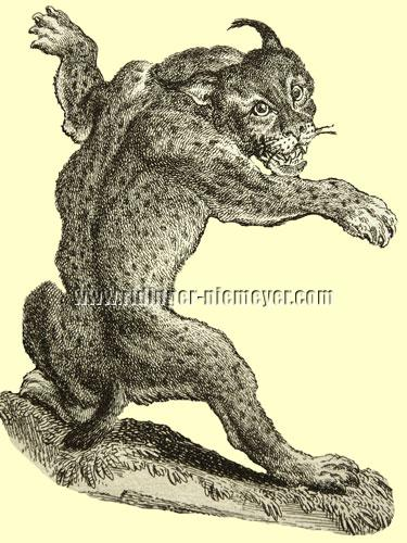 Johann  Elias Ridinger, Lynxes (detail)