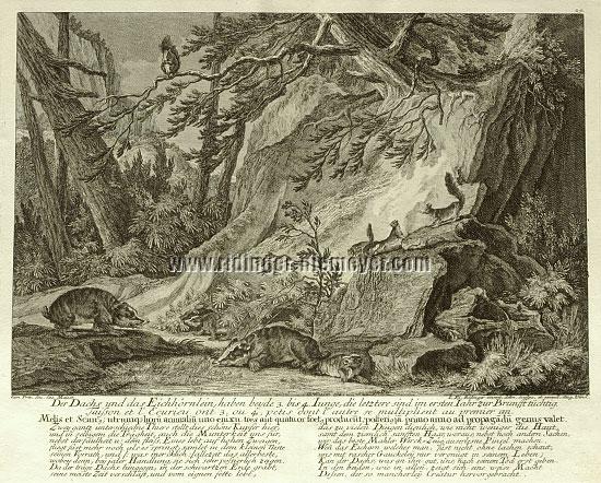 Johann Elias Ridinger, Der Dachs und das Eichhörnlein