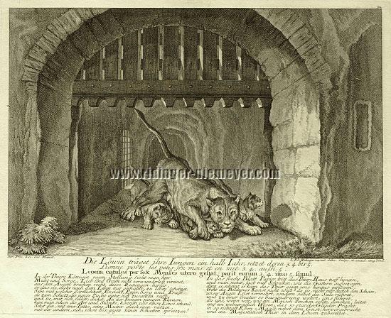 Ridinger, Lioness