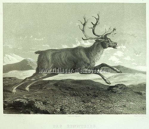 Johann Elias Ridinger, Reindeer