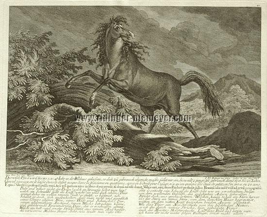 Johann Elias Ridinger, The Wild Horse