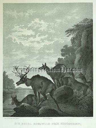 Johann Elias Ridinger, Midnight sheet of the Deer's Four Times of Day in toned lithograph by Hermann Menzler