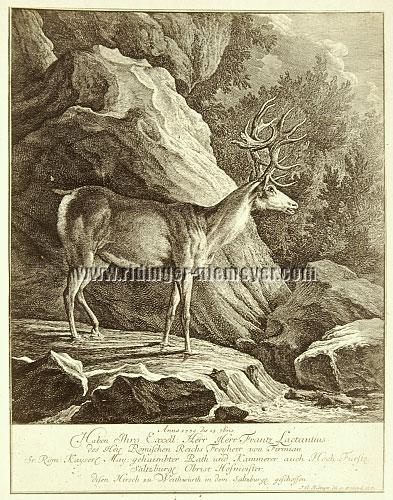 Johann Elias Ridinger, 1739 the 15th 7bris Franz Lactantius of Firmian has shot this stag in Salzburgerland