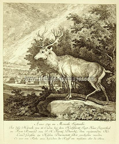 Johann Elias Ridinger, 1741 This Stag of 16 Points Has been shot at the High Princely Hunting Lodge Jægerthal in the Forest Romrod