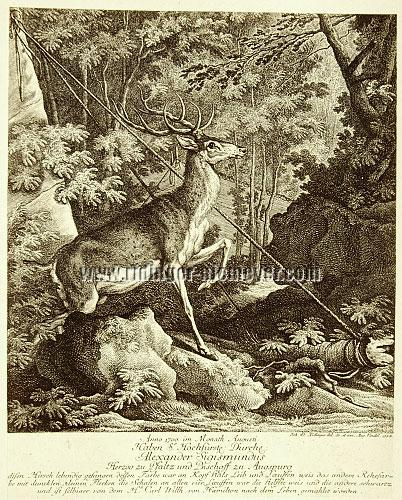 Johann Elias Ridinger, 1700 Alexander Sigismundus of Palatinate (Neuburg/Danube) has captured this stag alive