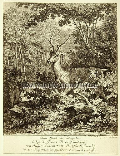 Johann Elias Ridinger, This Stag with Lob-ears Louis VIII of Hesse-Darmstadt has shot 1754