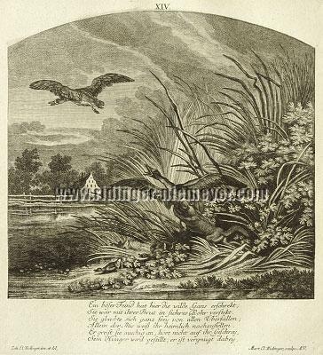 Johann Elias Ridinger, Poloecat surprises Geese
