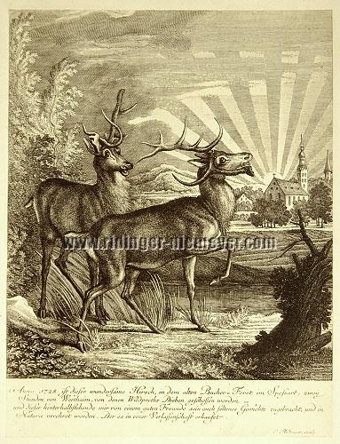 Johann Elias Ridinger, 1728 this wondrous Stag has been shot in the Spessart, two hours from Wertheim, by those game thieves