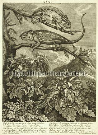 Johann Elias Ridinger, Chameleons and Lizard