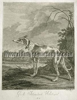 Johann Elias Ridinger, Great Irish Greyhound