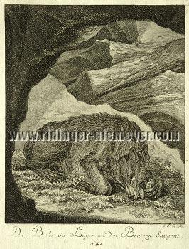Johann Elias Ridinger, The Bear in the Lair sucking on his Paws
