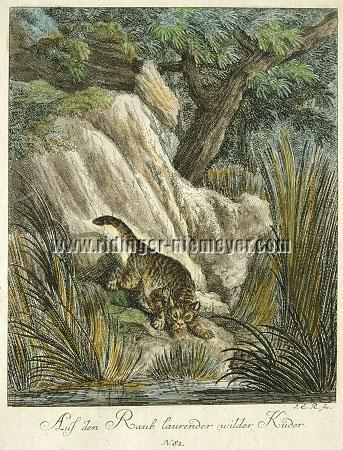 Johann Elias Ridinger, Wild He-Cat