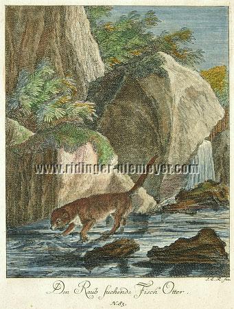 Johann Elias Ridinger, Otter