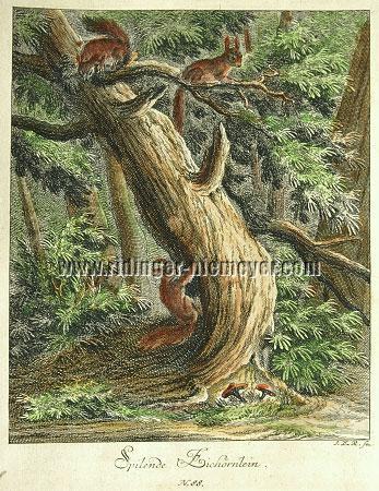 Johann Elias Ridinger, Squirrels