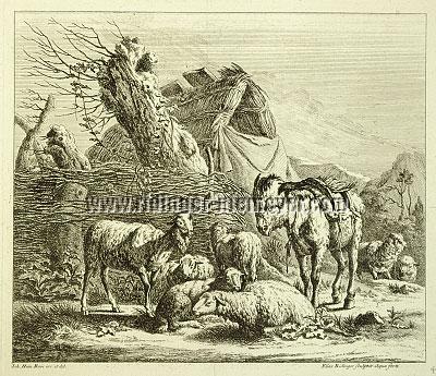 Johann Elias Ridinger, Viehstücke nach Johann Heinrich Roos IV