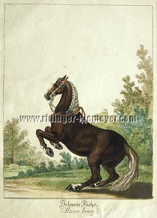 Ridinger, Liver Chestnut