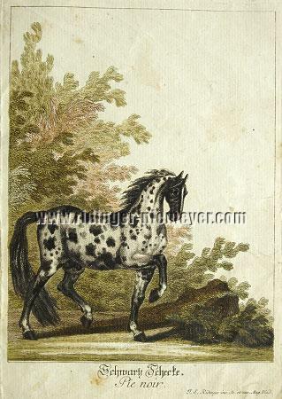 Ridinger, Piebald