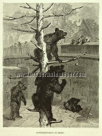 Friedrich Specht, Bear Pit (Bern)