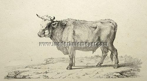 Raphael Wintter, Bull