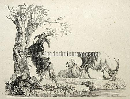Raphael Wintter, Animal Drawings for Landscape Furnishing