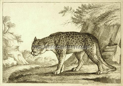 Joseph Georg Wintter, Leopard