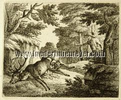 Joseph Georg Wintter, Stag of 10 Points barked dead