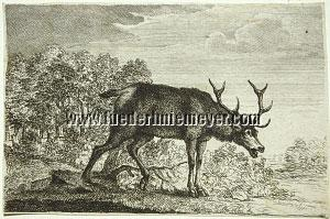 Joseph Georg Wintter, Rutting Stag